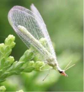 lacewing_3035 wiki free to share