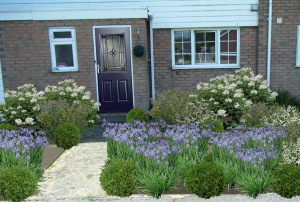 boring front with a blue and agapanthus