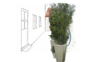 courtyard and bamboo