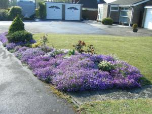 Lilac patch